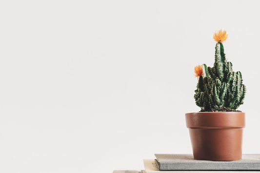 book-botanical-cactus-403571